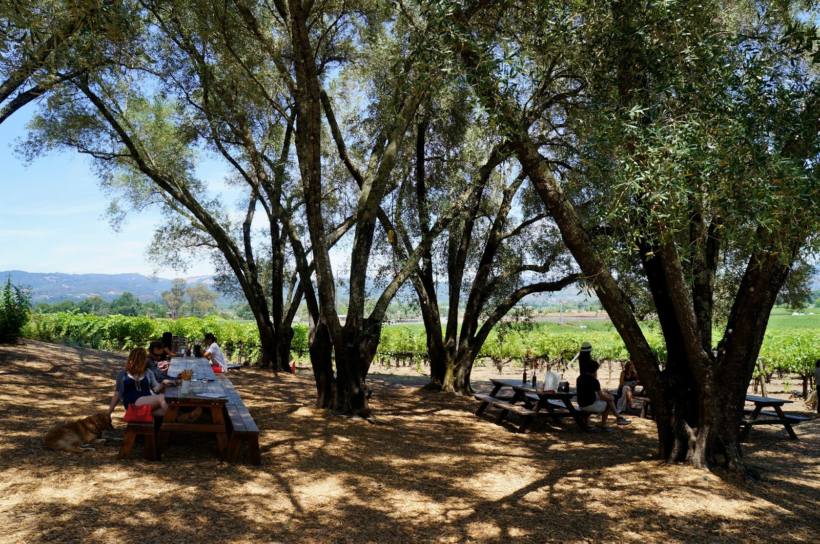 wine-tasting-at-tres-sabores-napa-valley