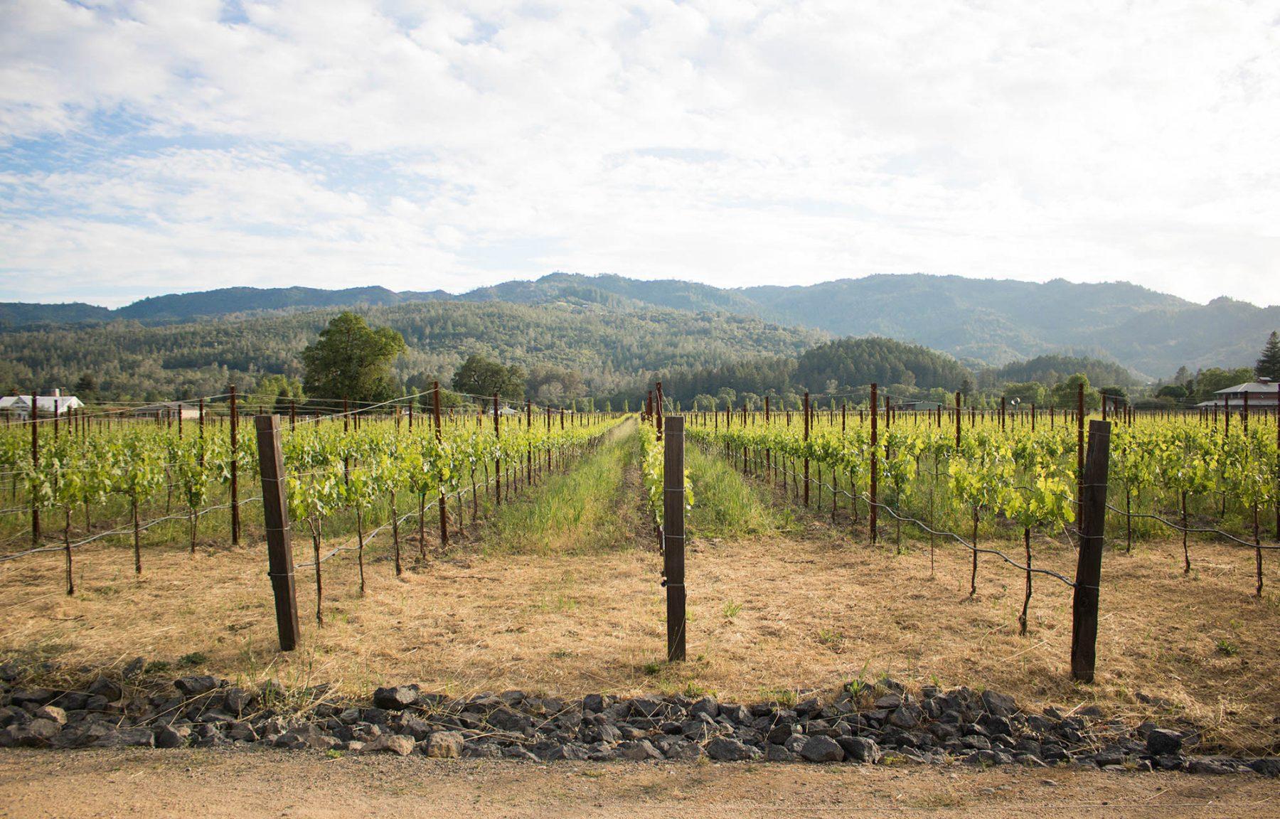 Hall Winery Napa Valley