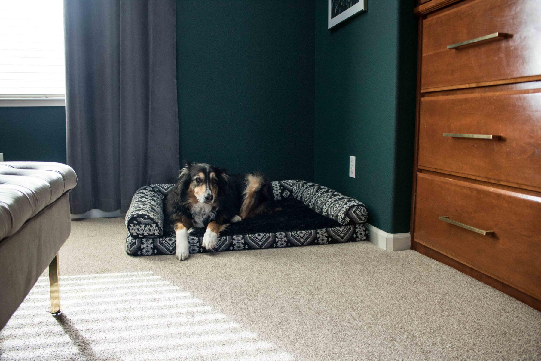 modern dog bed_